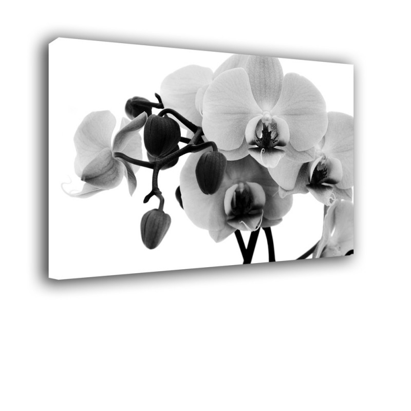 Orchidea nr 2160