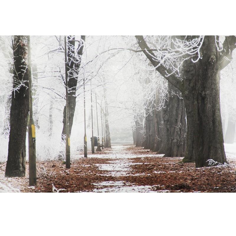 Leśna promenada