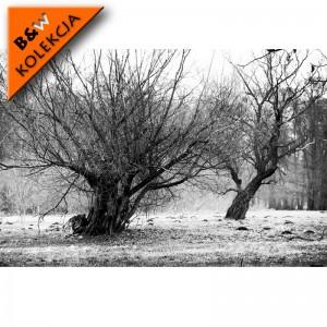 Drzewkony