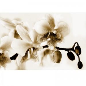 Fototapeta Orchidea sepia