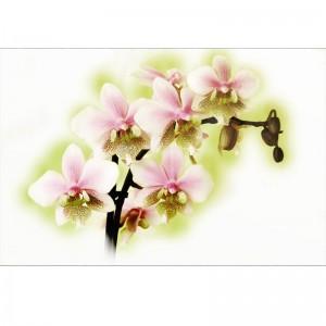 Orchidea VI