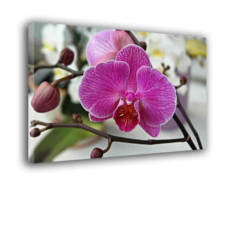 Orchidea nr 2173