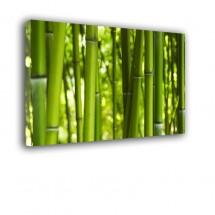 Ozdoba ściany w formie obrazu Bambusy nr 2218