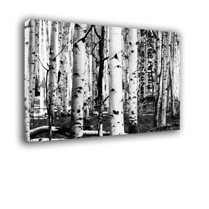 Ozdoba ściany w formie obrazu czarno białe brzozy nr 2228