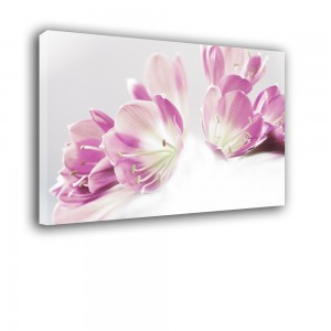 Obraz fioletowa kliwia nr 2270