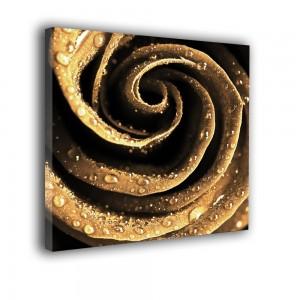 Obraz złota róża nr 2245