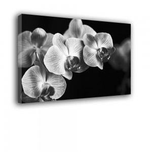 Orchidea nr 2293