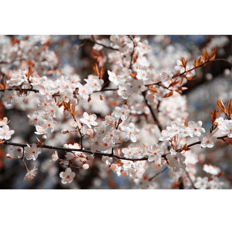 Fototapeta na ścianę - białe kwiatuszki