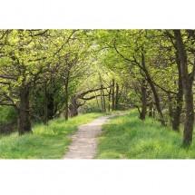 Fototapeta leśna droga