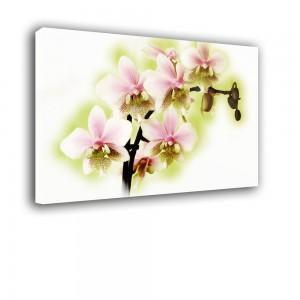 Orchidea nr 2404