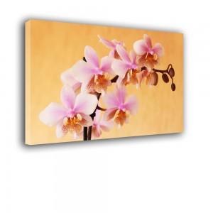 Orchidea nr 2412