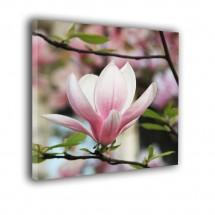Magnolia nr 2451