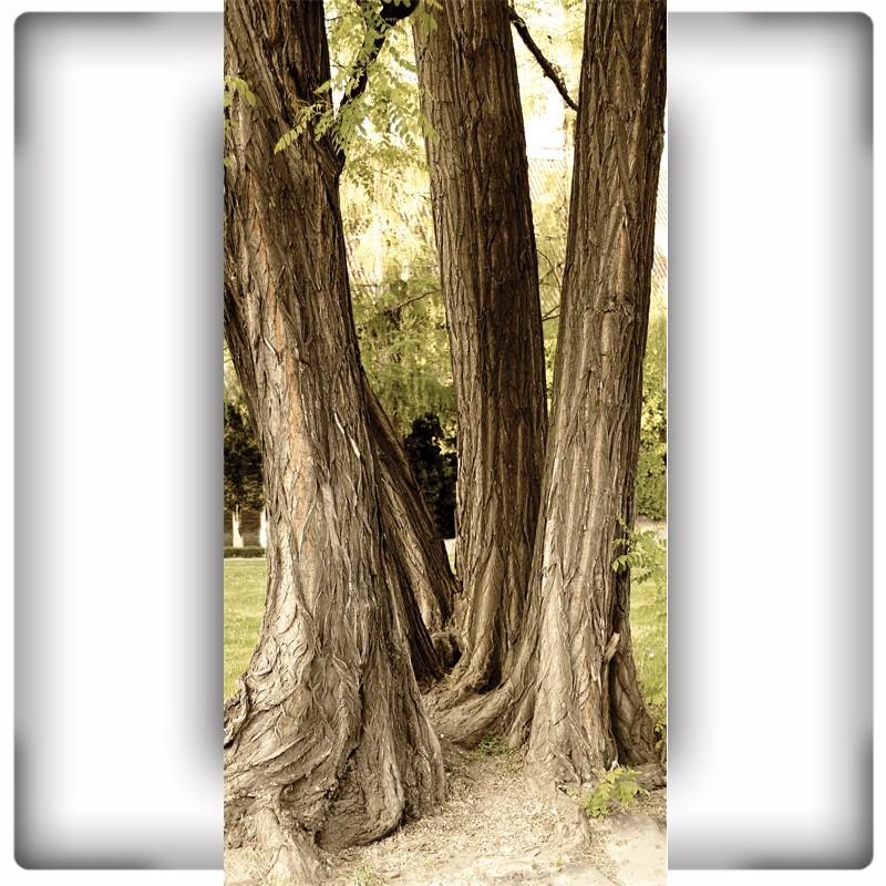 Fototapeta na wąską ścianę trzy drzewa