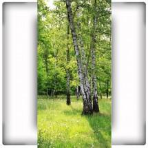 Fototapeta zielona łąka z brzozami