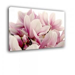 Magnolia nr 2474