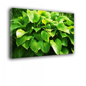 Obraz zielone liście nr 2481