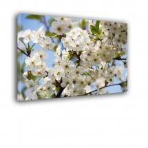 Kwiaty nr 2491