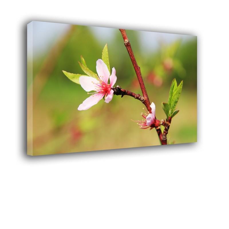 Kwiat nr 2495