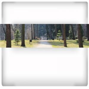 Leśny deptak