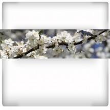 Zapach wiosny