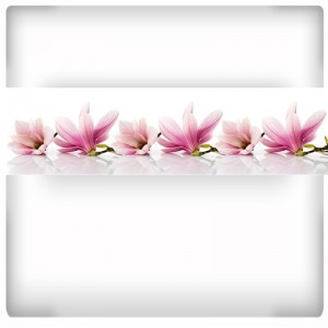 Fototapeta panorama Magnolii