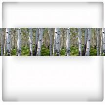 Fototapeta laminowana brzozy