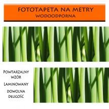 Fototapeta zieleniec
