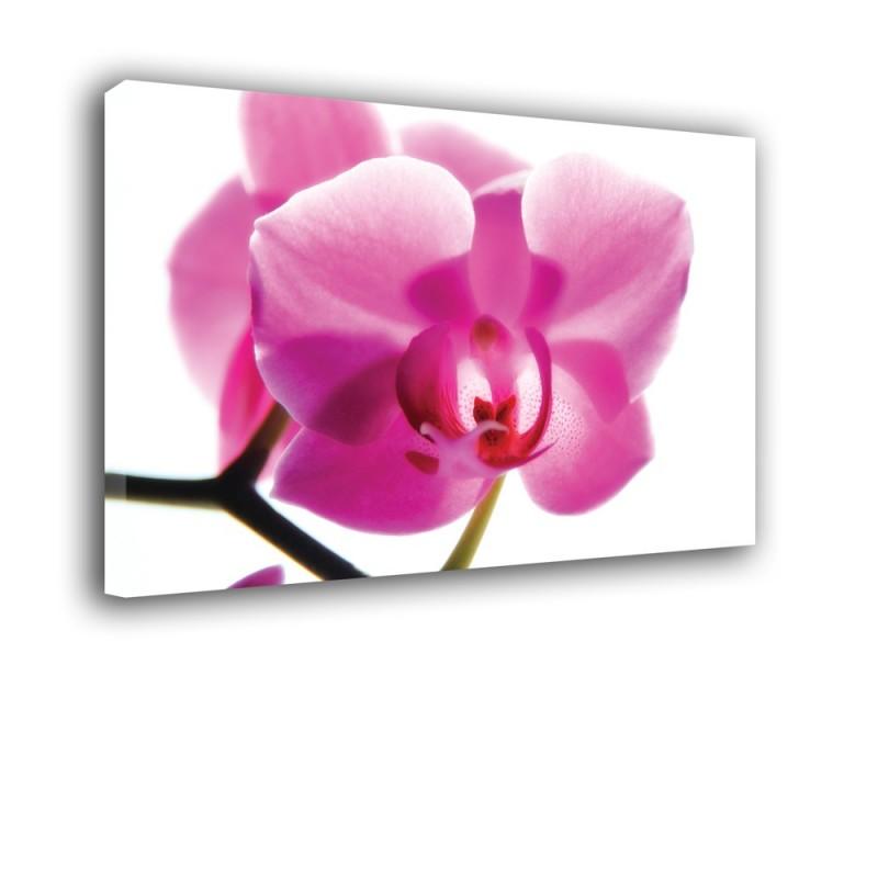 Orchidea nr 2314