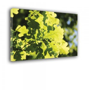 Obraz słoneczne liście nr 2342