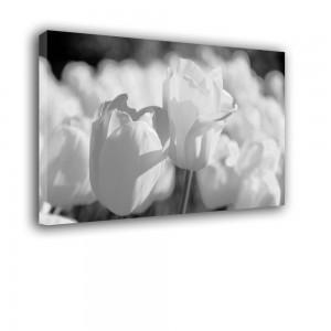 Tulipany nr 2366