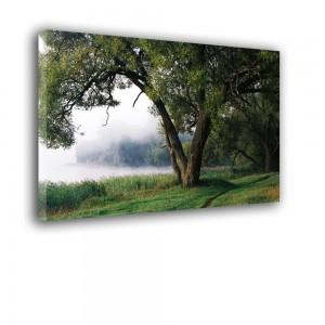 Drzewo nr 2368