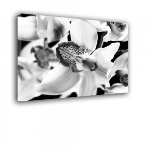 Orchidea nr 2386
