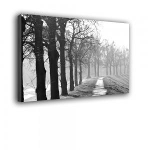 Aleja drzew nr 2501