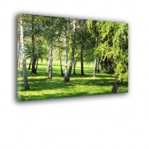 Ozdoba ściany w formie obrazu brzozowa polana nr 2510