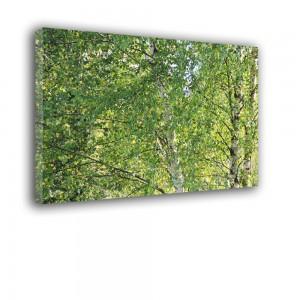 Obraz brzozowe liście nr 2512