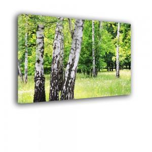 Drzewa nr 2529