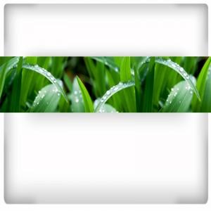 Źdźbła trawy - fototapeta do kuchni