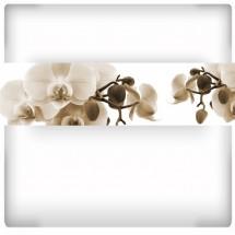 Orchidea IV