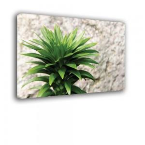 Rośliniak nr 2551
