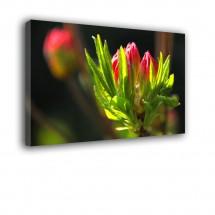 Kwiat nr 2561