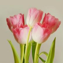 Fototapeta pięć różowych tulipanów