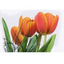 Fototapeta bukiet tulipanów