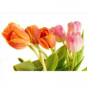 Fototapeta rządy tulipanów