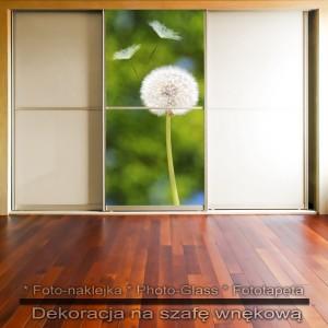 Dmuchawiec w naturze - dekoracja na szafę