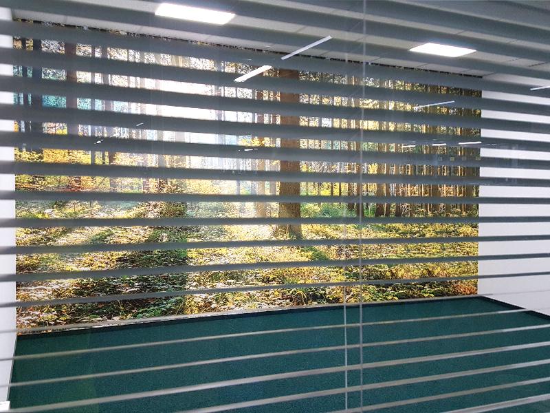 Fototapeta las w sali konferencyjnej