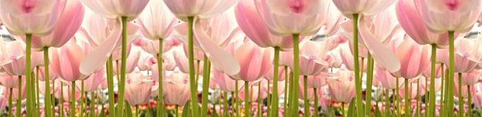 Fototapety różowe na ścianę