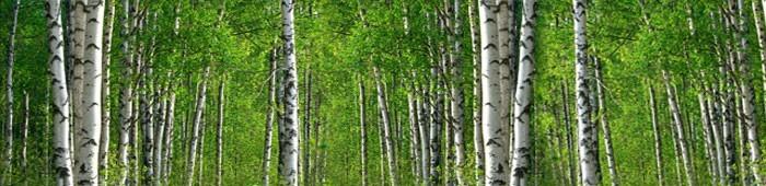 Fototapety zielone